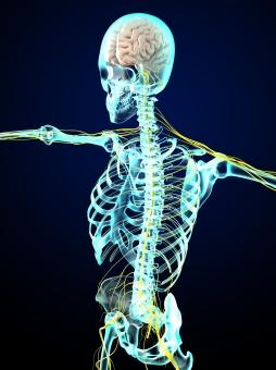 骨について